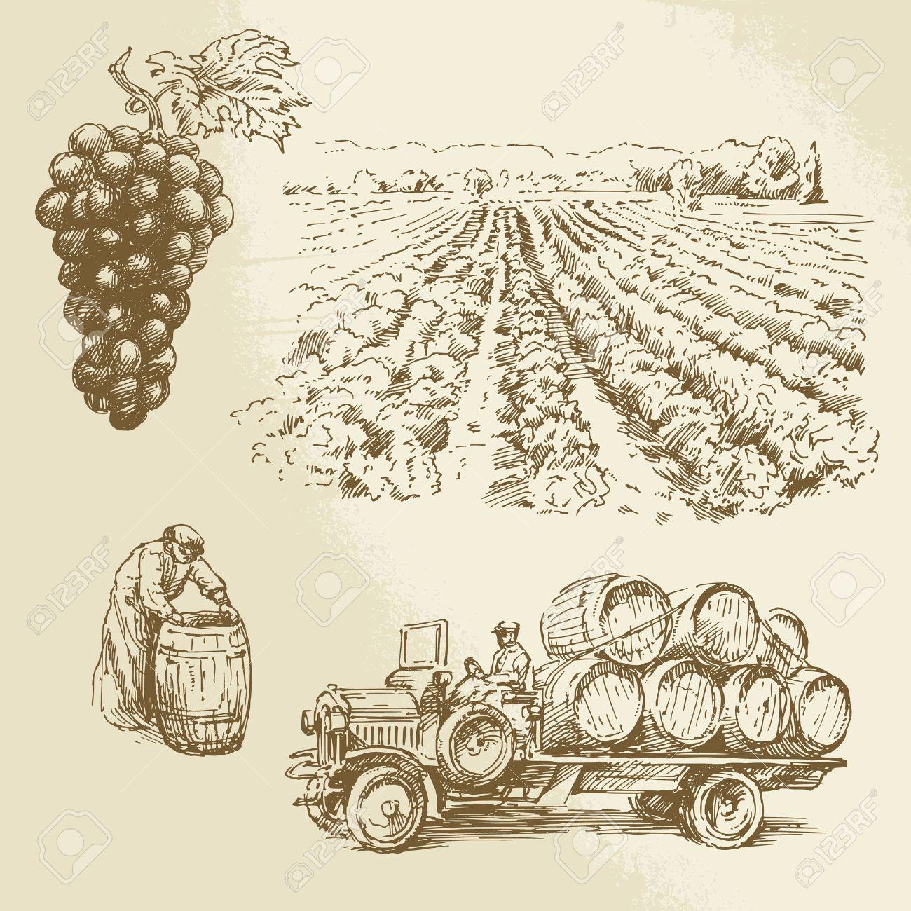 Weinberg, der Ernte, Farm - Hand gezeichnete Sammlung Standard-Bild - 26590672