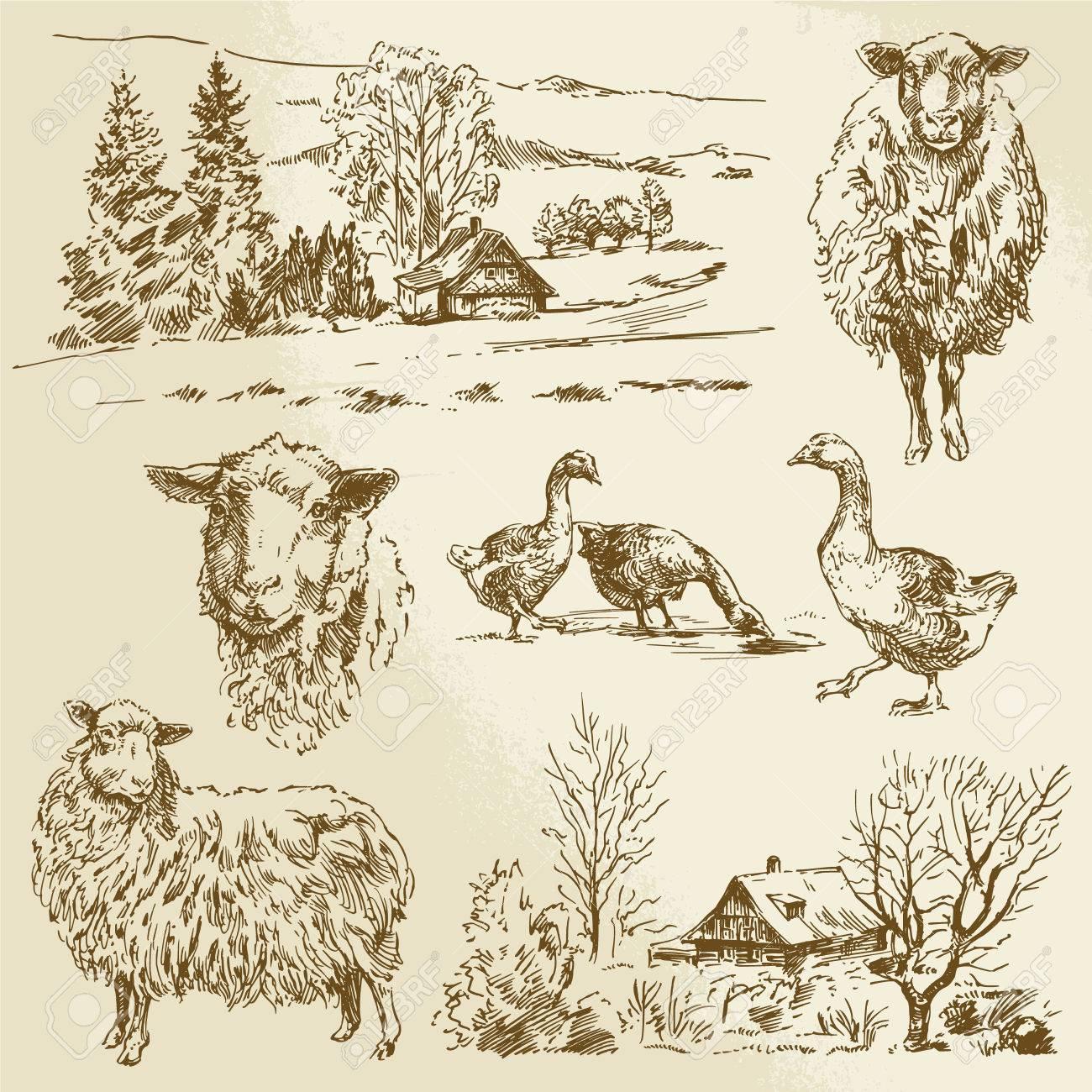 ländliche Landschaft, von Nutztieren - Hand gezeichnete Illustration Standard-Bild - 28072372