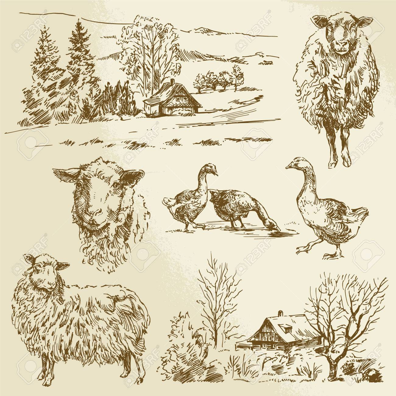 rural landscape, farm animal - hand drawn illustration Standard-Bild - 28072372