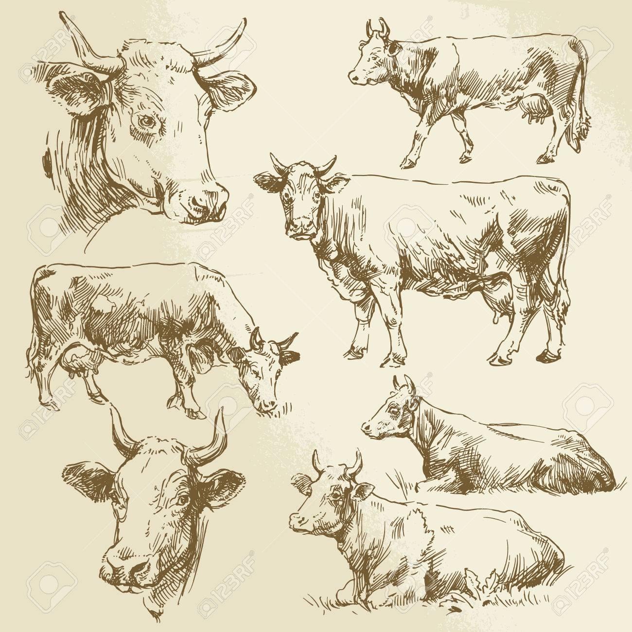 hand drawn cows - 29449439