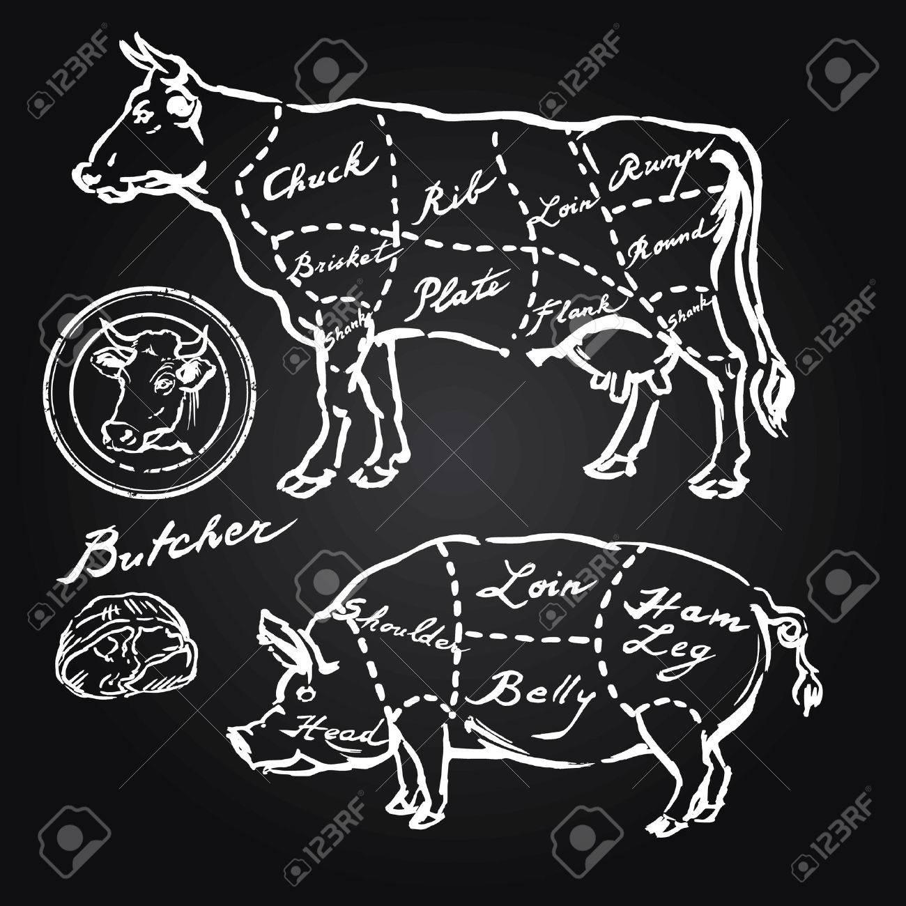 pork and beef cuts - hand drawn set Standard-Bild - 29452892