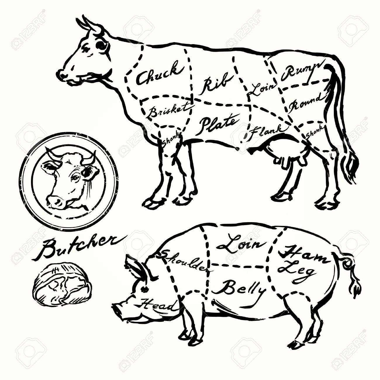 pork and beef cuts - hand drawn set - 29452893