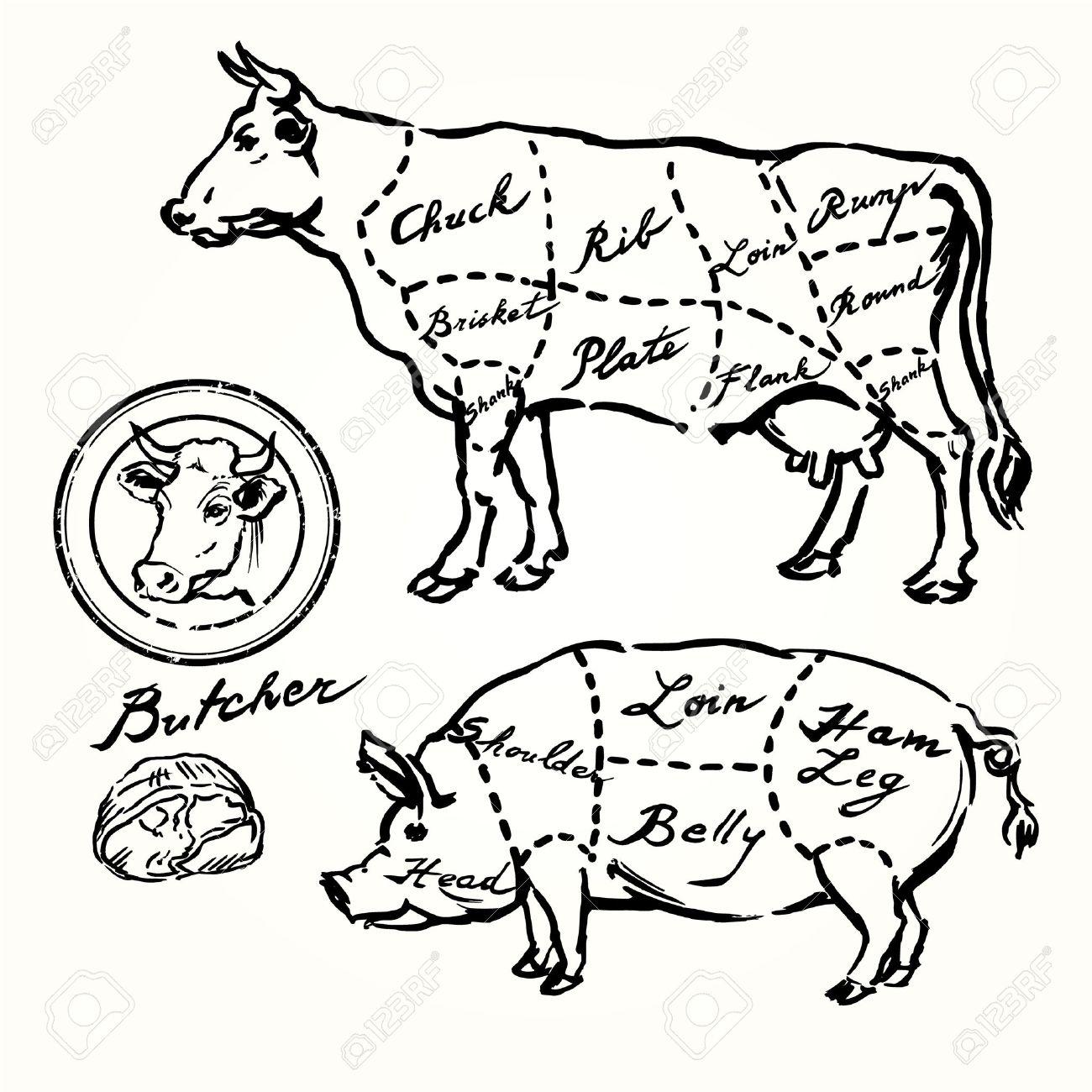 pork and beef cuts - hand drawn set Standard-Bild - 29452893