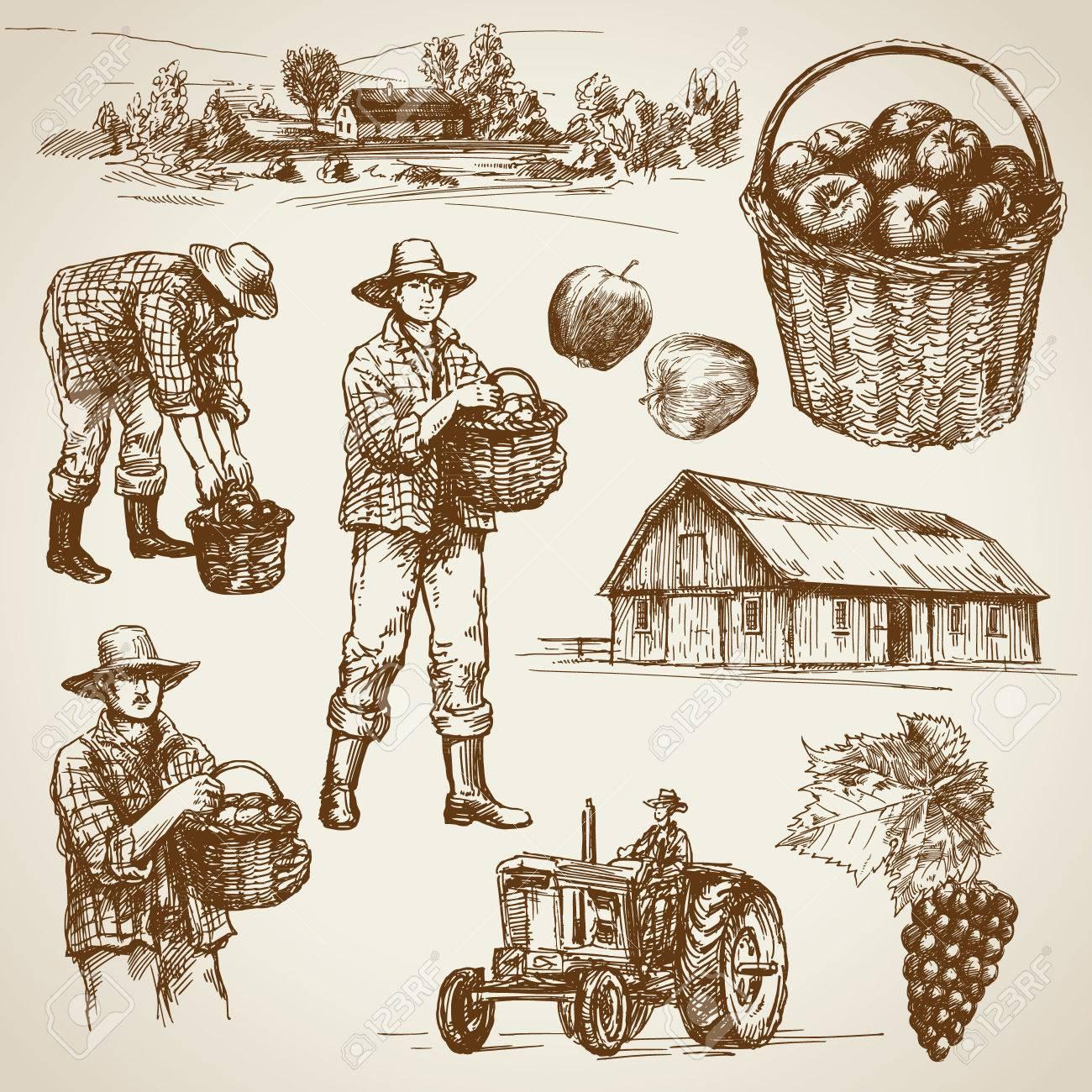 Farmland, harvest on the farm - 50302881