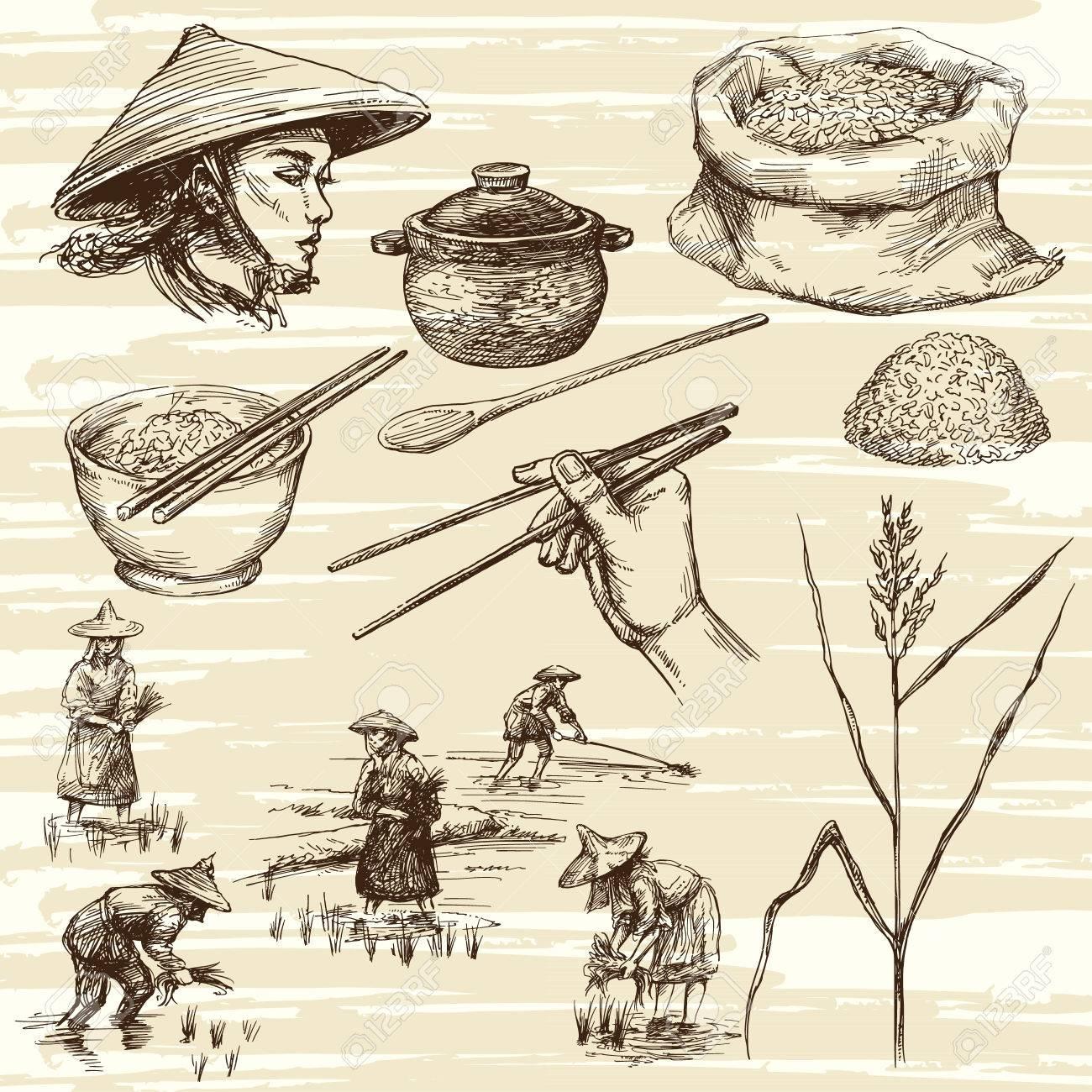 Hand gezeichnete Illustration, Reisernte Standard-Bild - 50352723