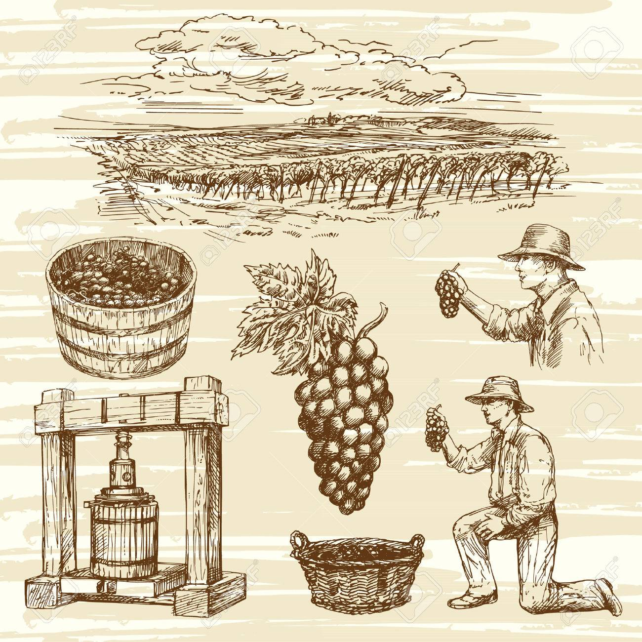 vineyard, hand drawn collection - 53158398