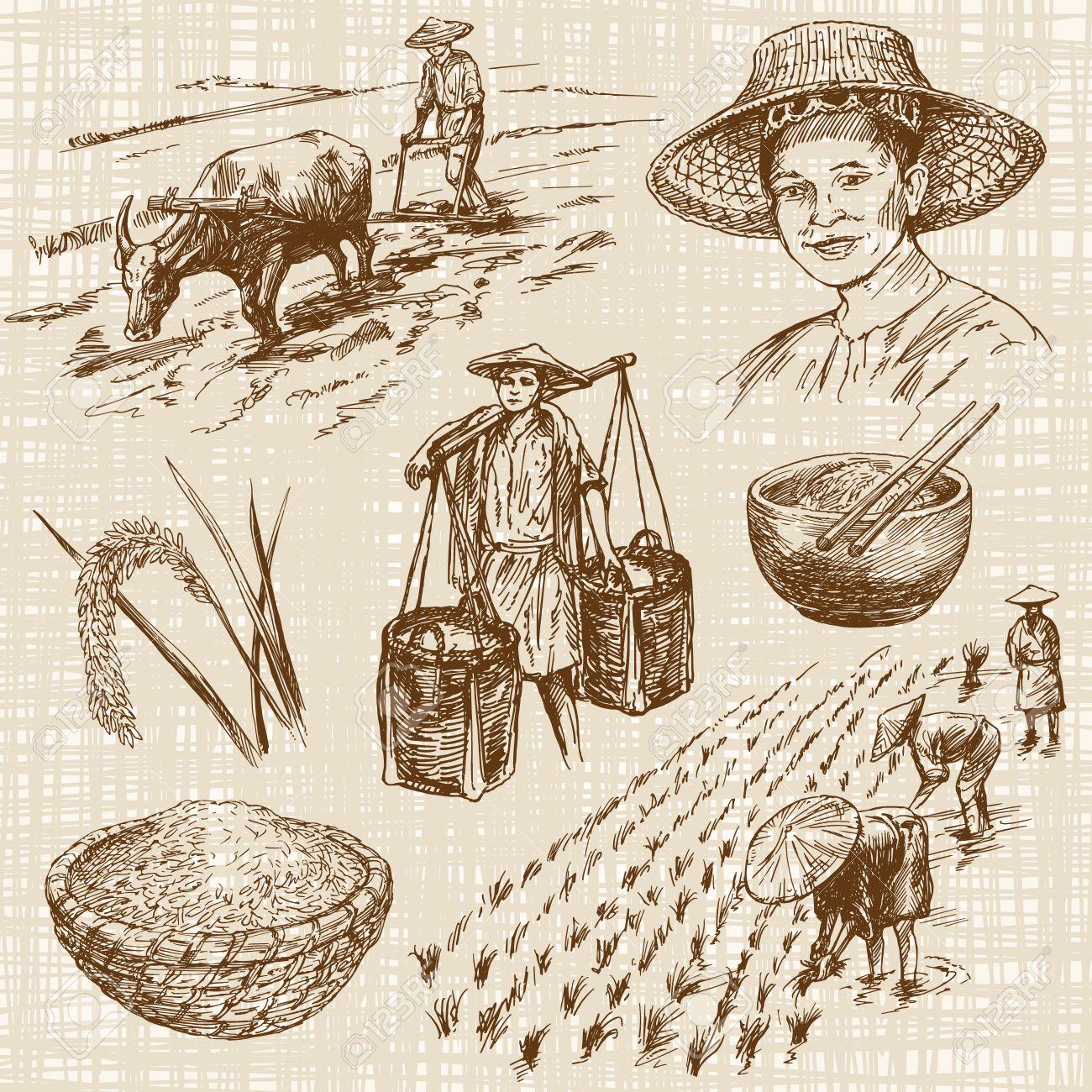 Hand drawn illustration, rice harvest Standard-Bild - 55079704