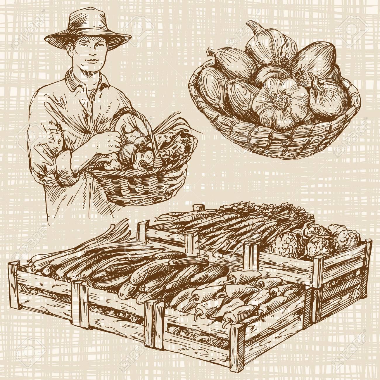 Vegetables at a farmers market, hand drawn set - 55079706