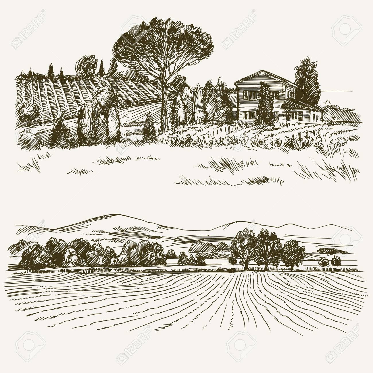 Rural landscape with country house and vineyard. - 62268727