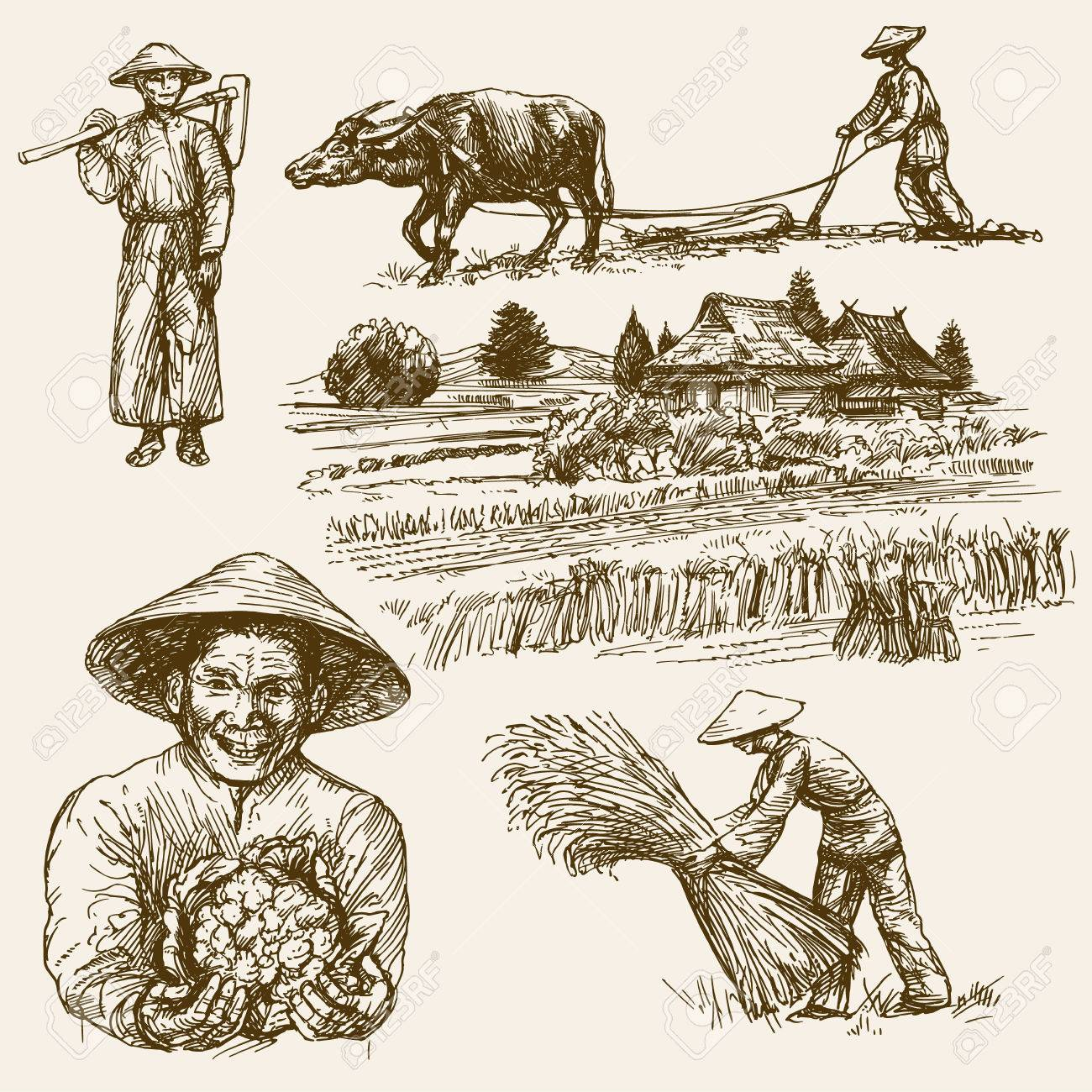 Asian farmers working on Field. Hand drawn illustration. Rice harvest. - 69807099
