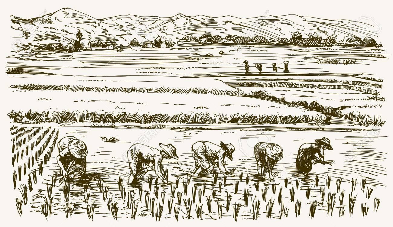 Asian farmers working on Field. Hand drawn illustration. Rice harvest. - 78064936
