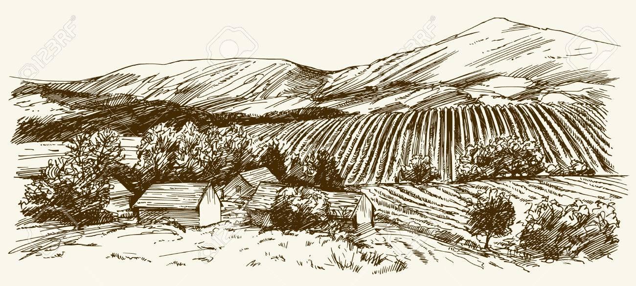 Wide view of vineyard. Vineyard landscape panorama. Hand drawn illustration. - 71489019