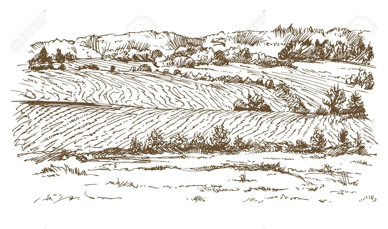 Agricultural landscape in hand drawn, sketched illustration. - 88880606