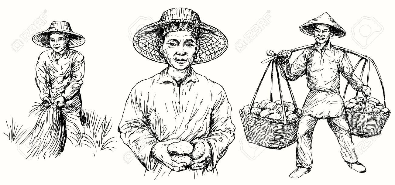 harvesting rice in asia Clipart | +1,566,198 clip arts