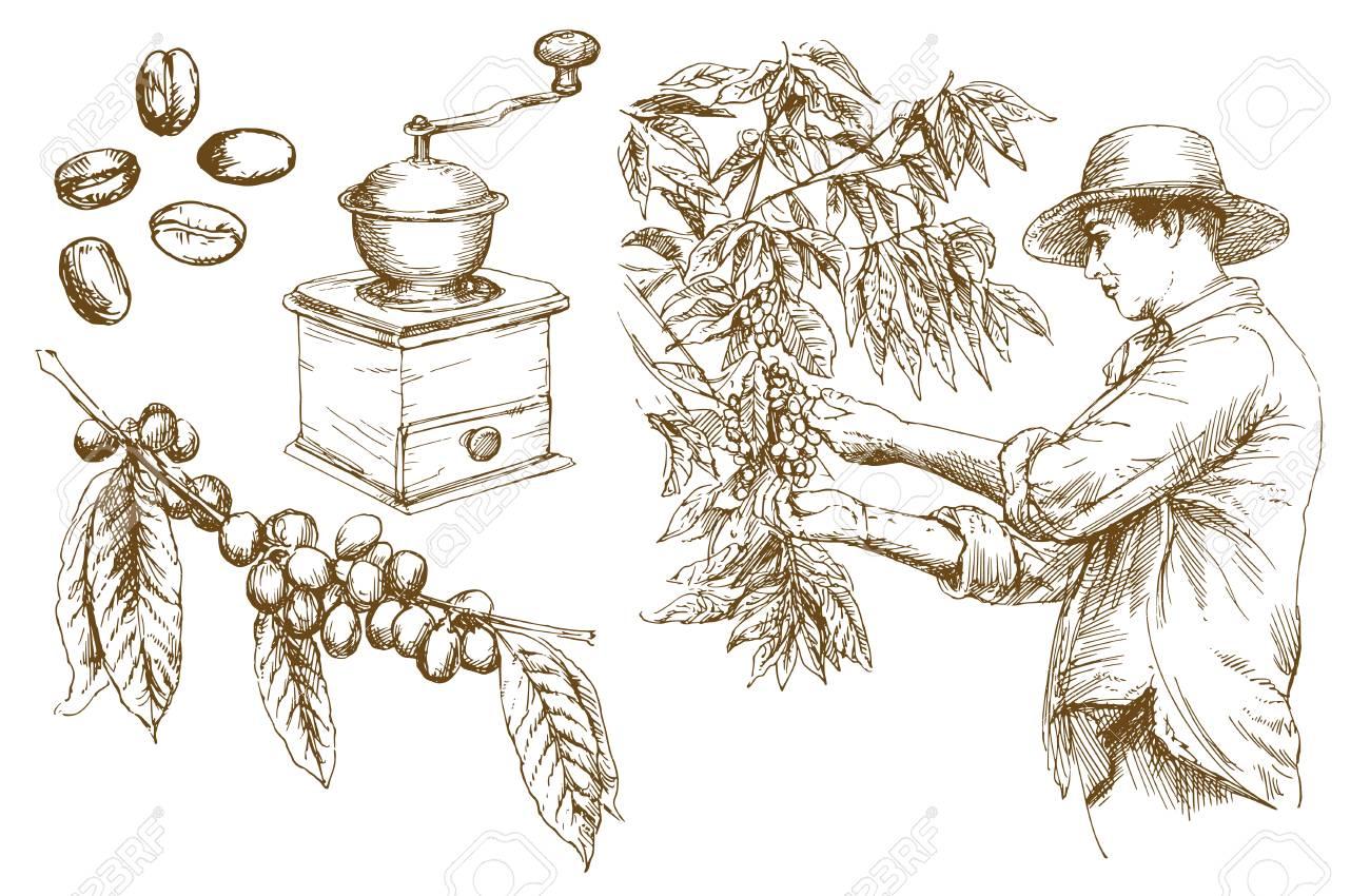 Farmer picking coffee beans. Hand drawn vector illustration. - 110701723