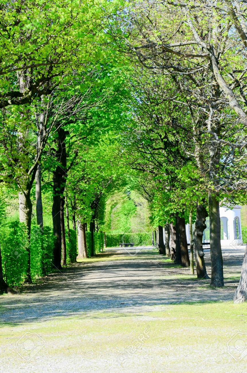 Merveilleux Stock Photo   Tunnel Of Tree In Gardent From Czech