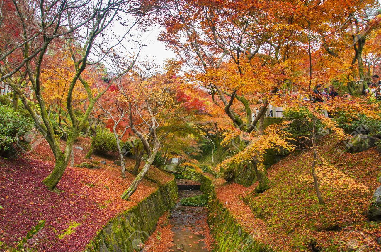 Autumn Season Red Maple Or Red Leaves Garden At Kyoto, Japan Stock ...