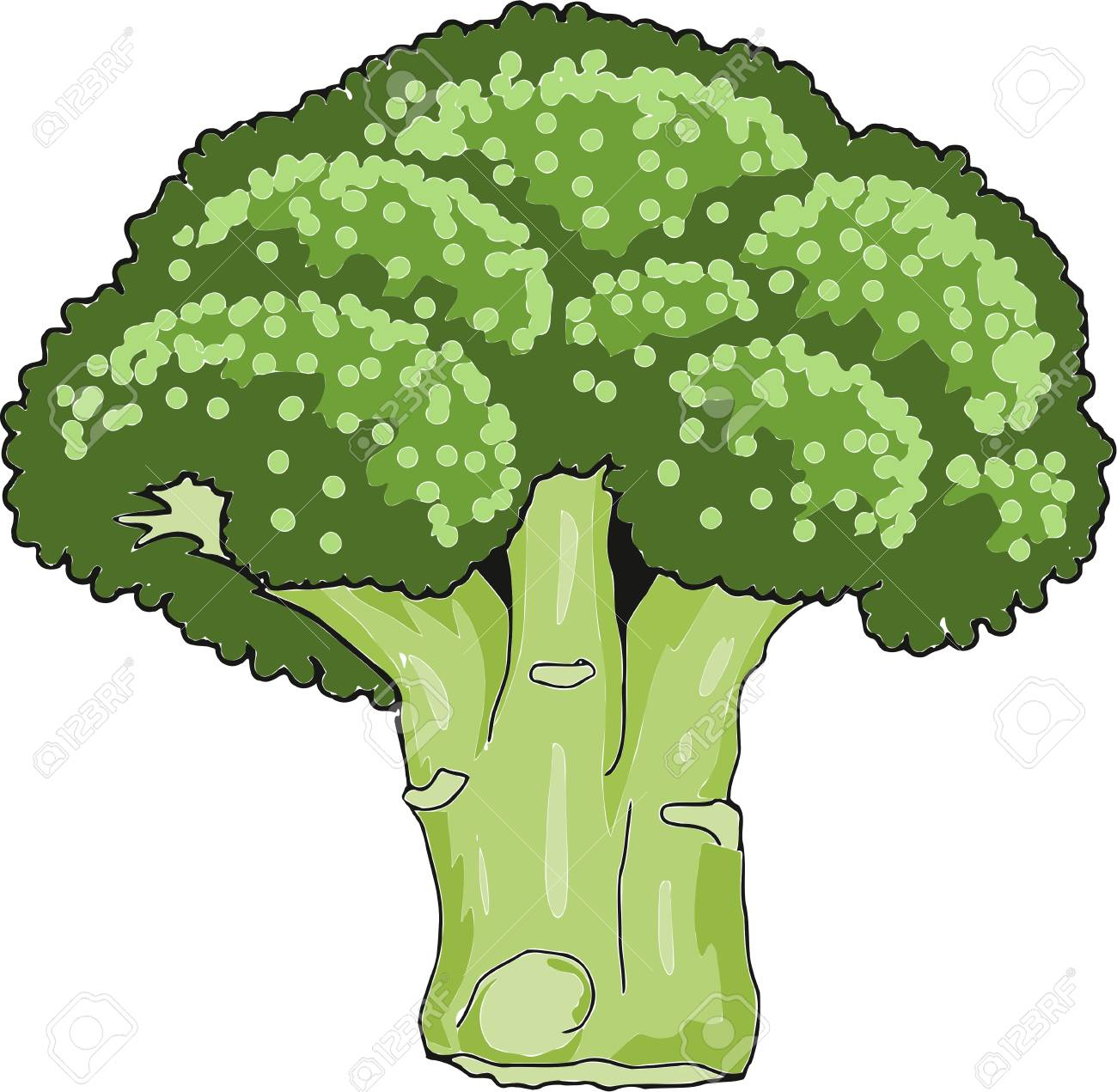 broccoli vector illustration isolated on white background royalty free cliparts vectors and stock illustration image 99015621 broccoli vector illustration isolated on white background
