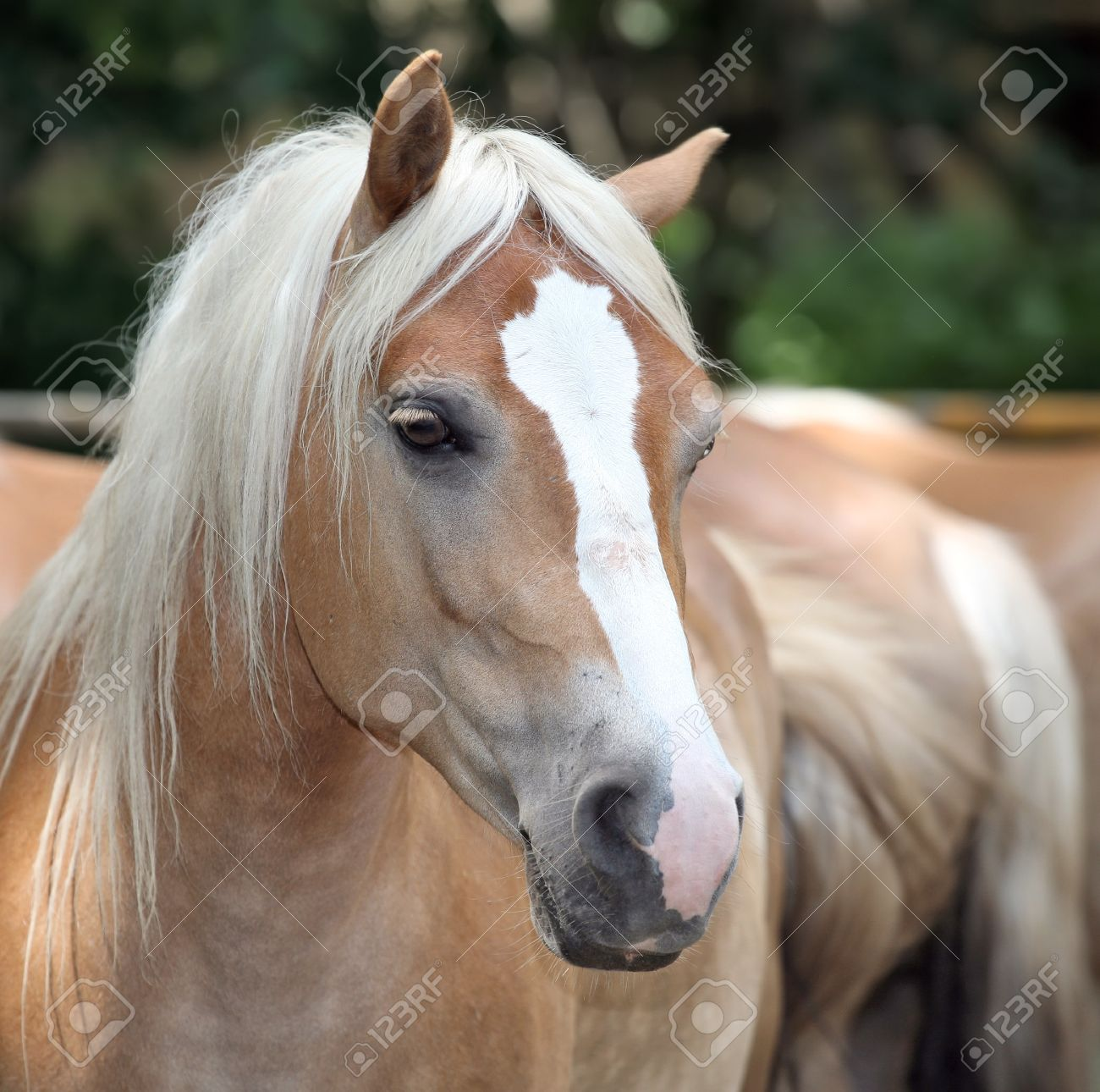 A Closeup Portrait Of The Head Of A Beautiful Horse Stock Photo Picture And Royalty Free Image Image 14128713