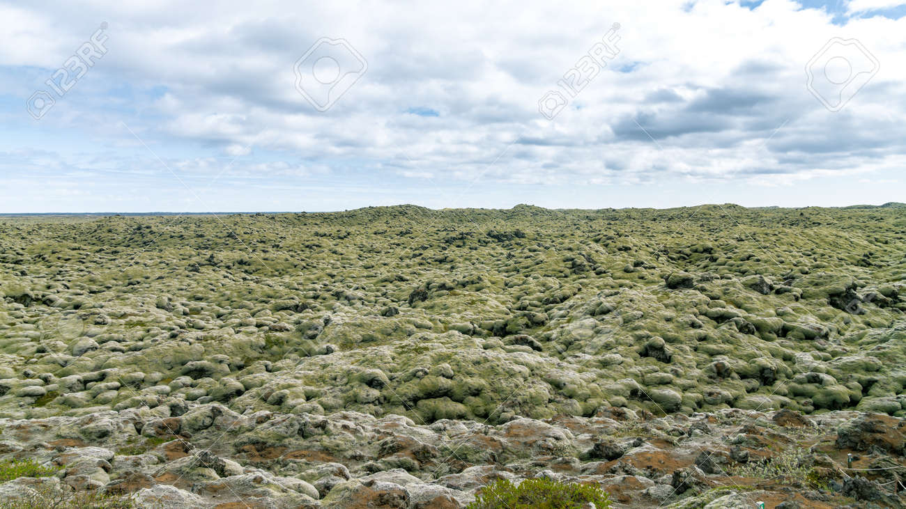 Moss covered lava fields, also known as green lava in Skaftareldahraun, Iceland - 164386283