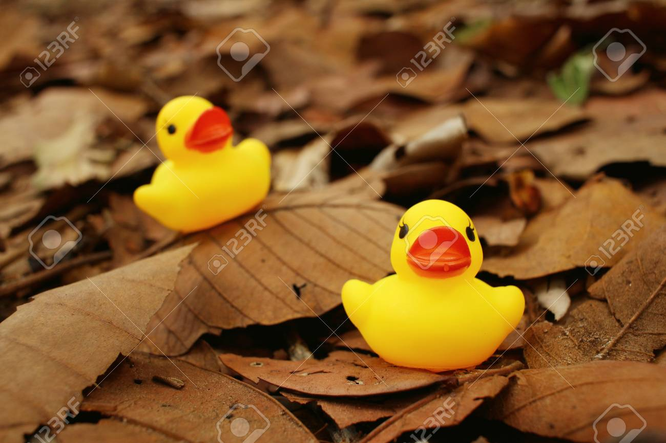 Yellow Rubber Duck On Background Of Brown Leaves. Stock Photo ...