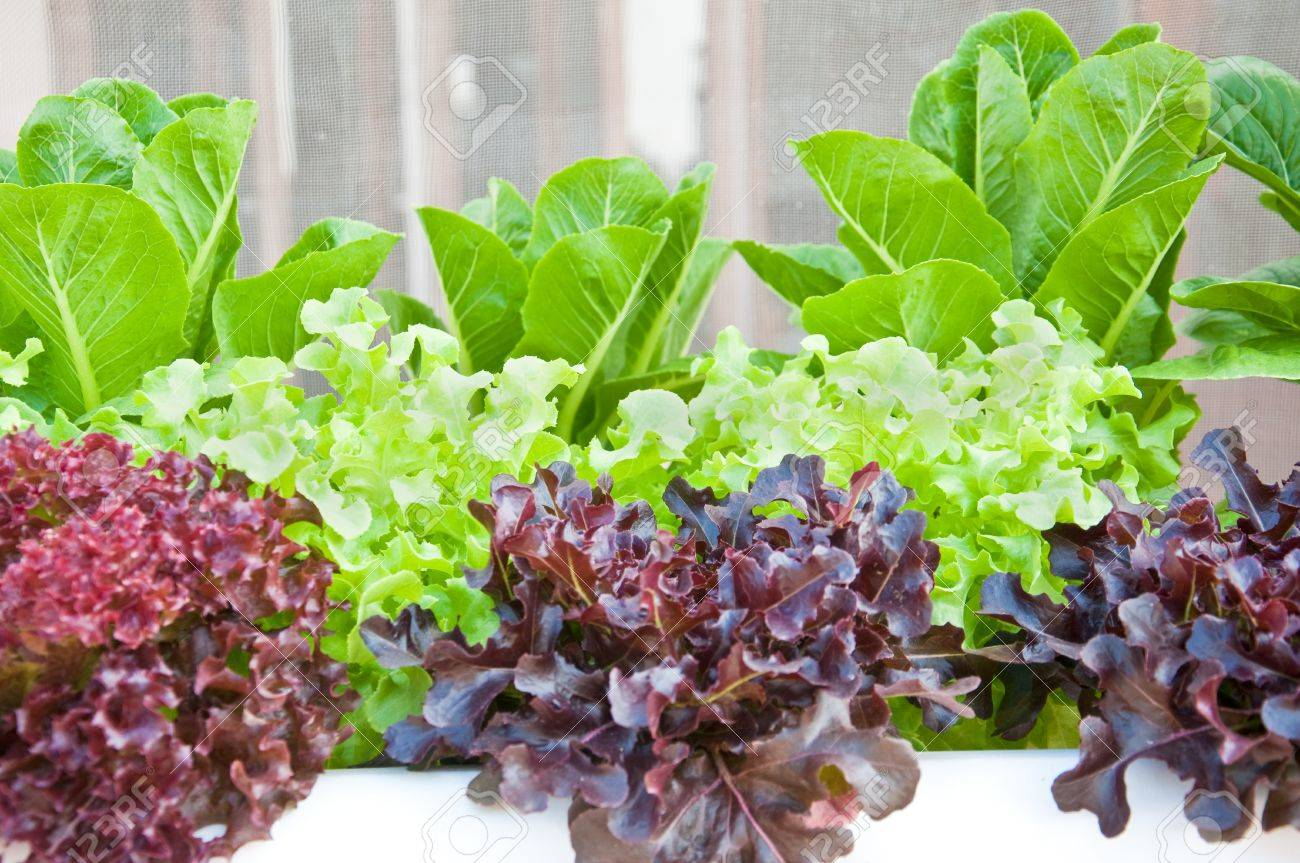 many kinds of soilless or hydroponic system Stock Photo - 12651162
