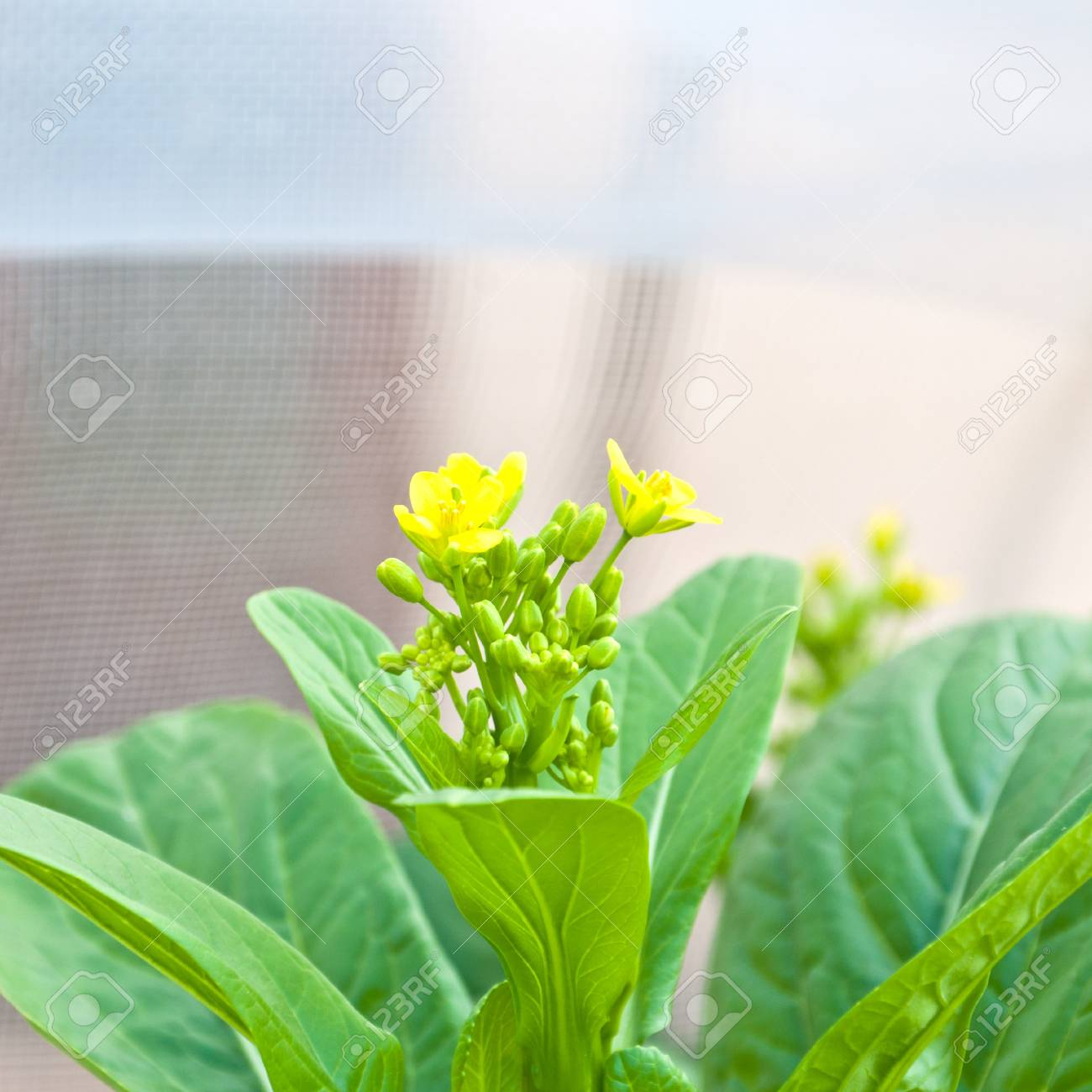 soilless or hydroponic Stock Photo - 14722821