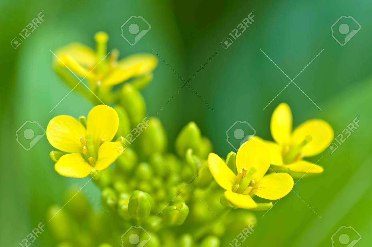 soilless or hydroponic Stock Photo - 14722823