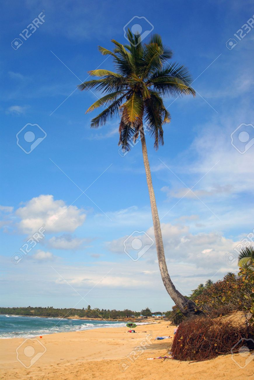Single palm tree pictures - omnimon x picture