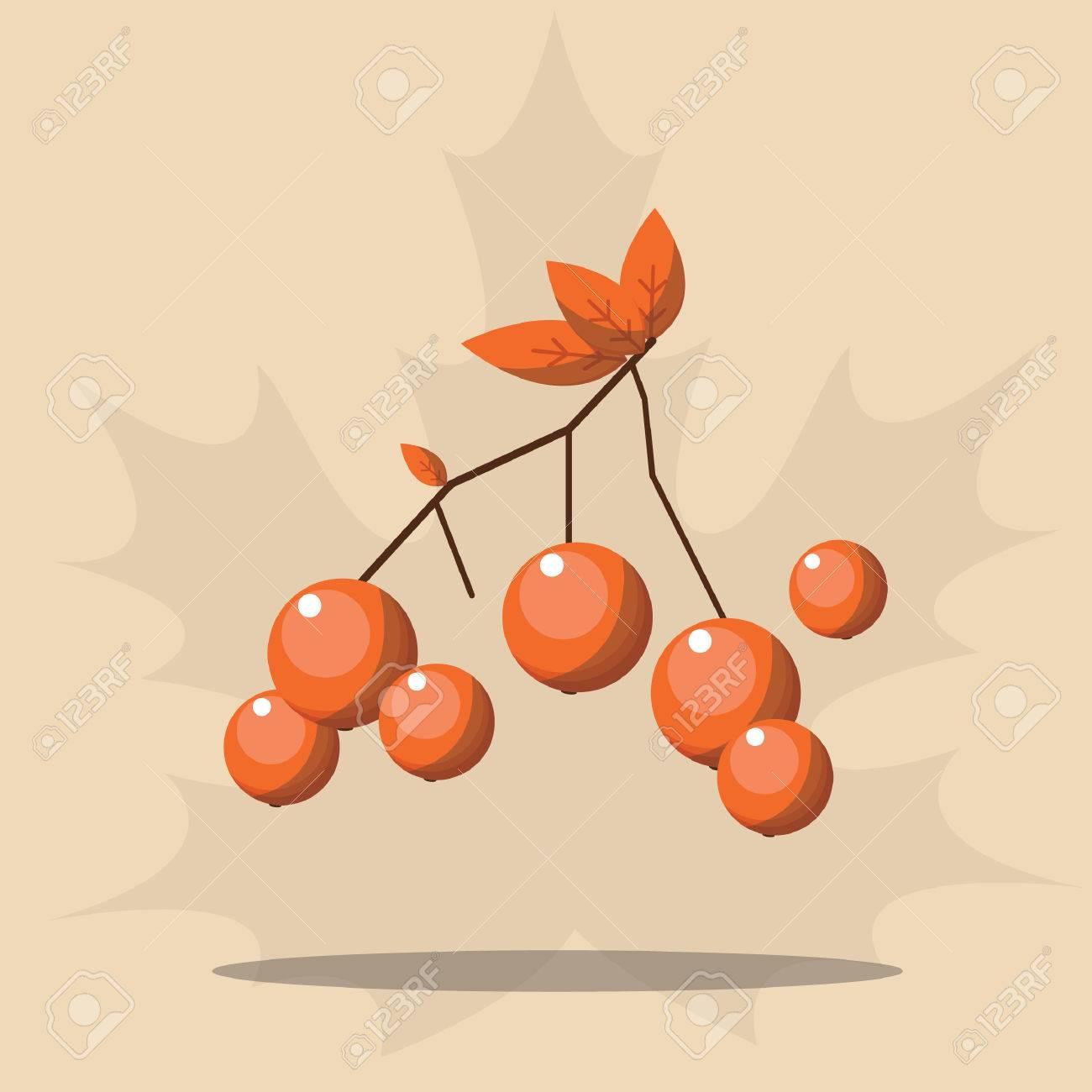 rowan fruit - 52589670