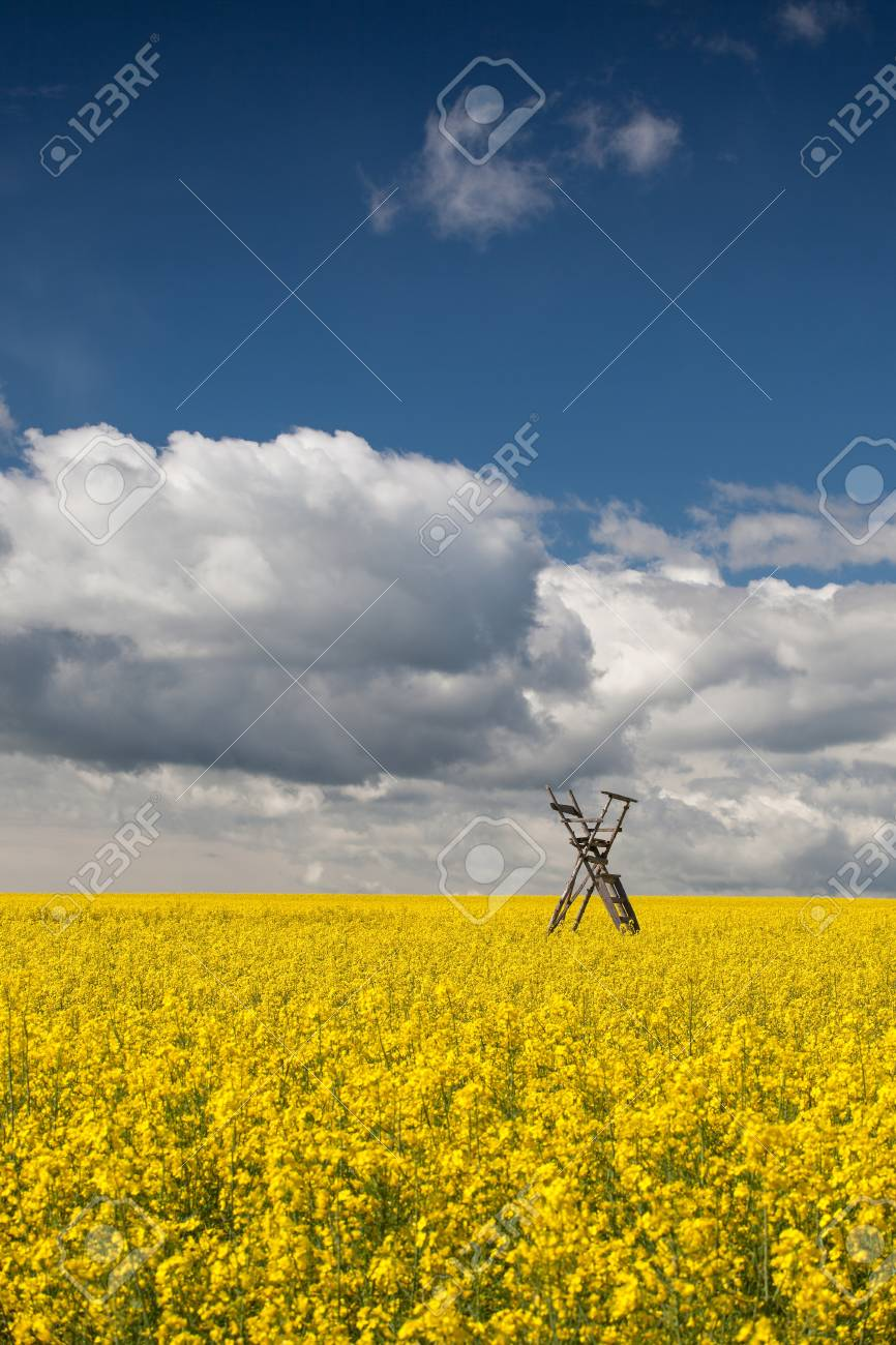 Flowers of oil in rapeseed field with hunting tower Stock Photo - 20009172
