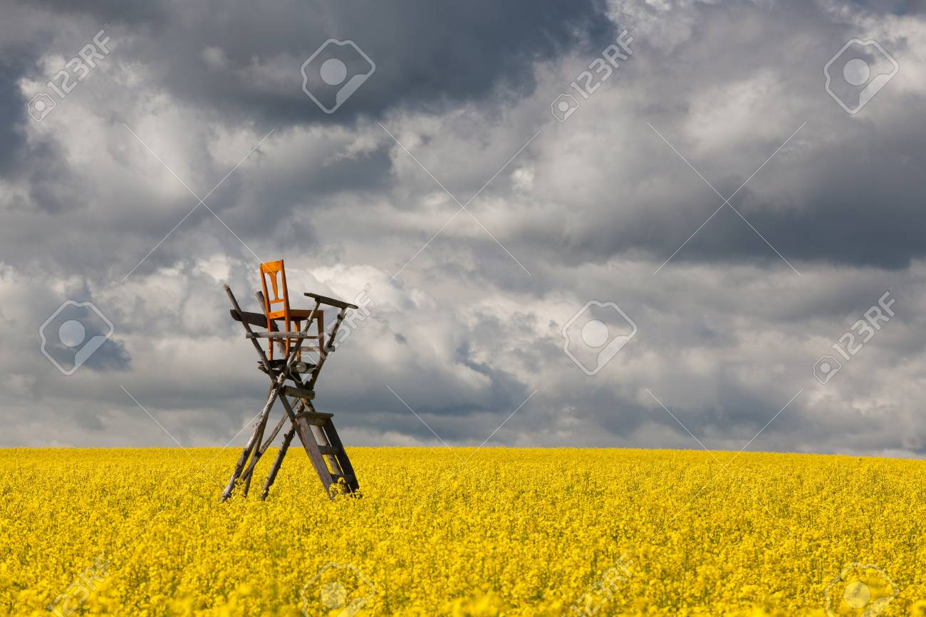 Flowers of oil in rapeseed field with hunting tower Stock Photo - 20239248