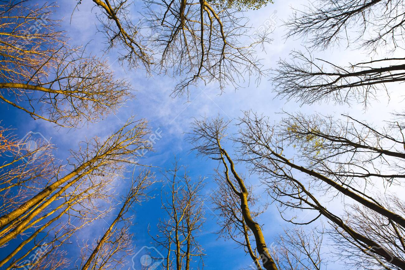 Sky view through the trees of a forest in autumn. Looking up at the trees. Low angle view on the canopy of a forest - 124601442