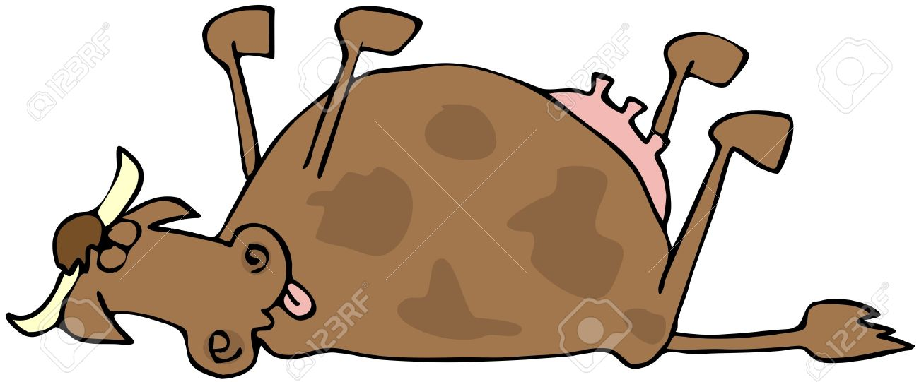 Dead Cow Stock Photo, Picture And Royalty Free Image. Image 7940236.