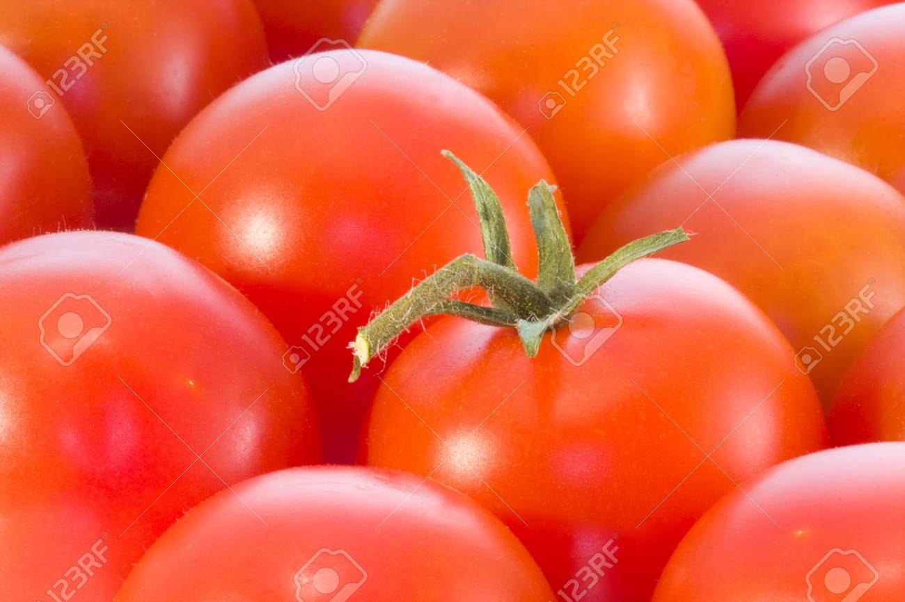 tomatoes Stock Photo - 9254016