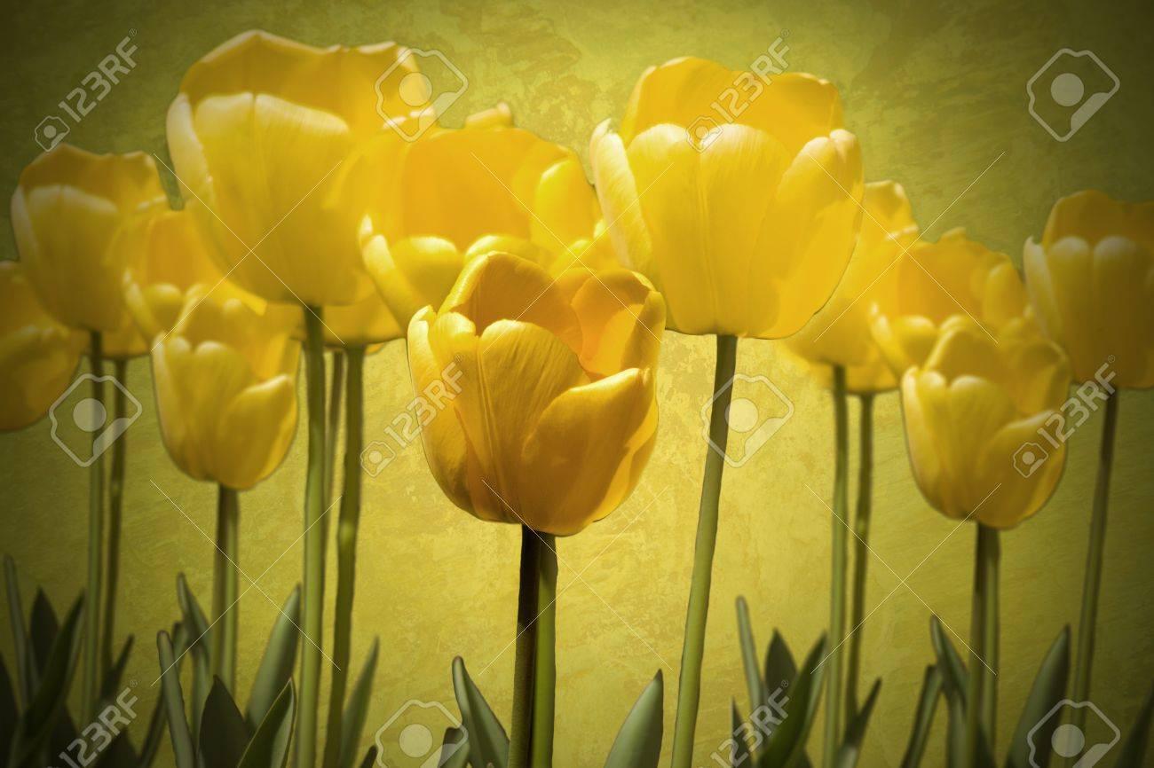 tulips Stock Photo - 10034308