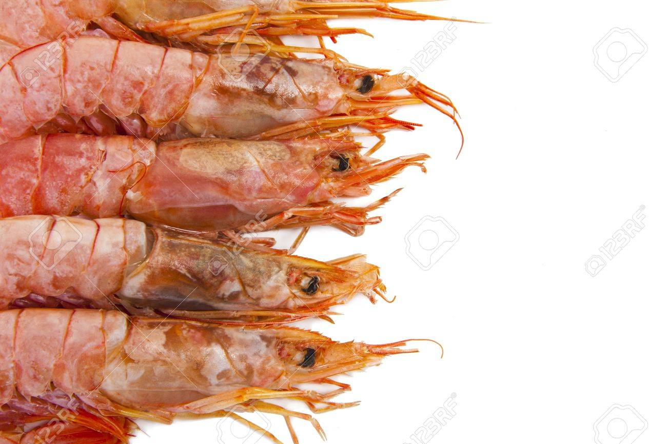 fresh seafood, shrimps and crustaceans Stock Photo - 11066069