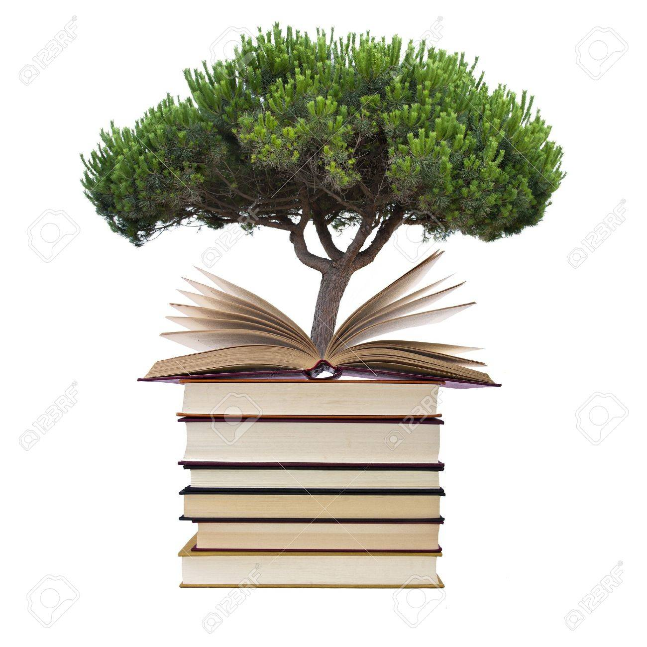 books with tree isolated on white background - 14777156