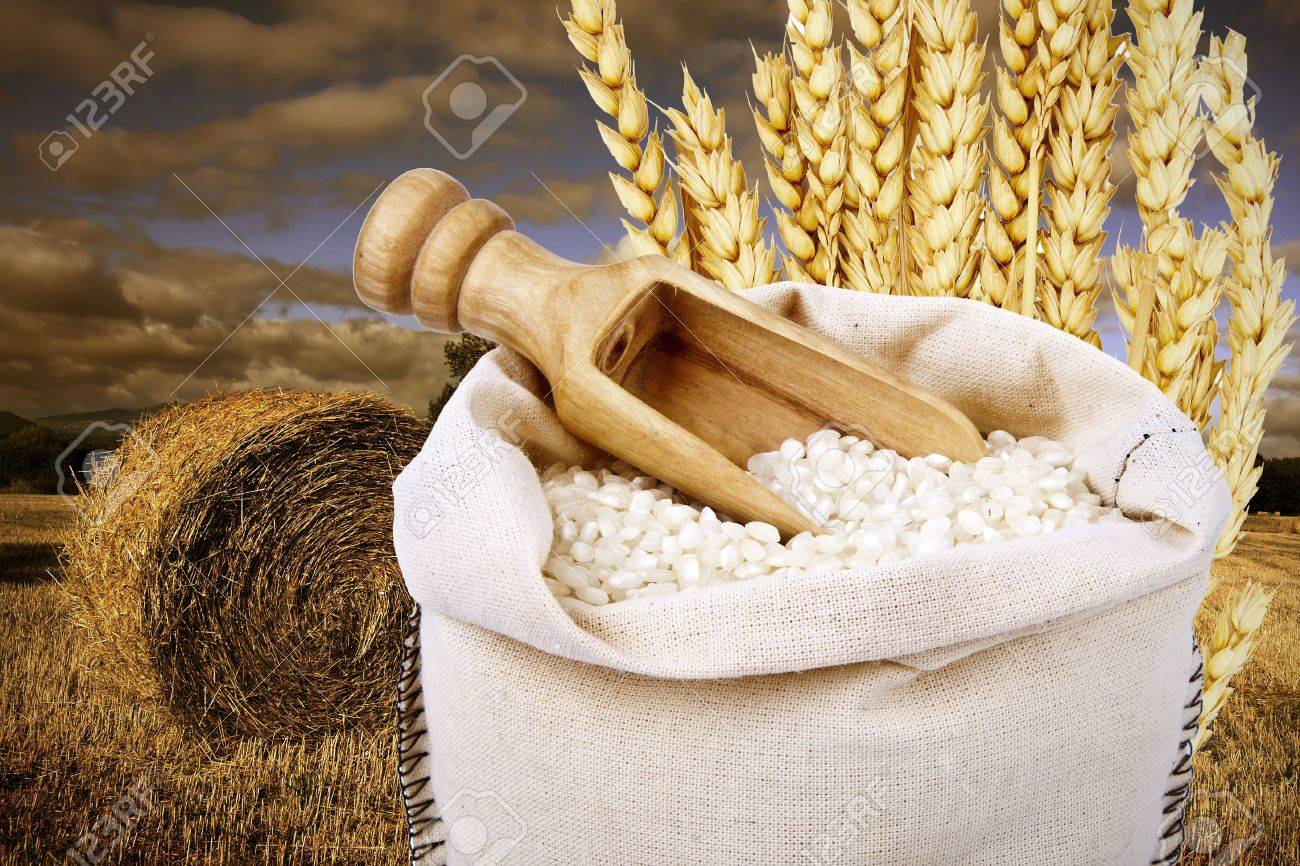 rice harvest - 15716045