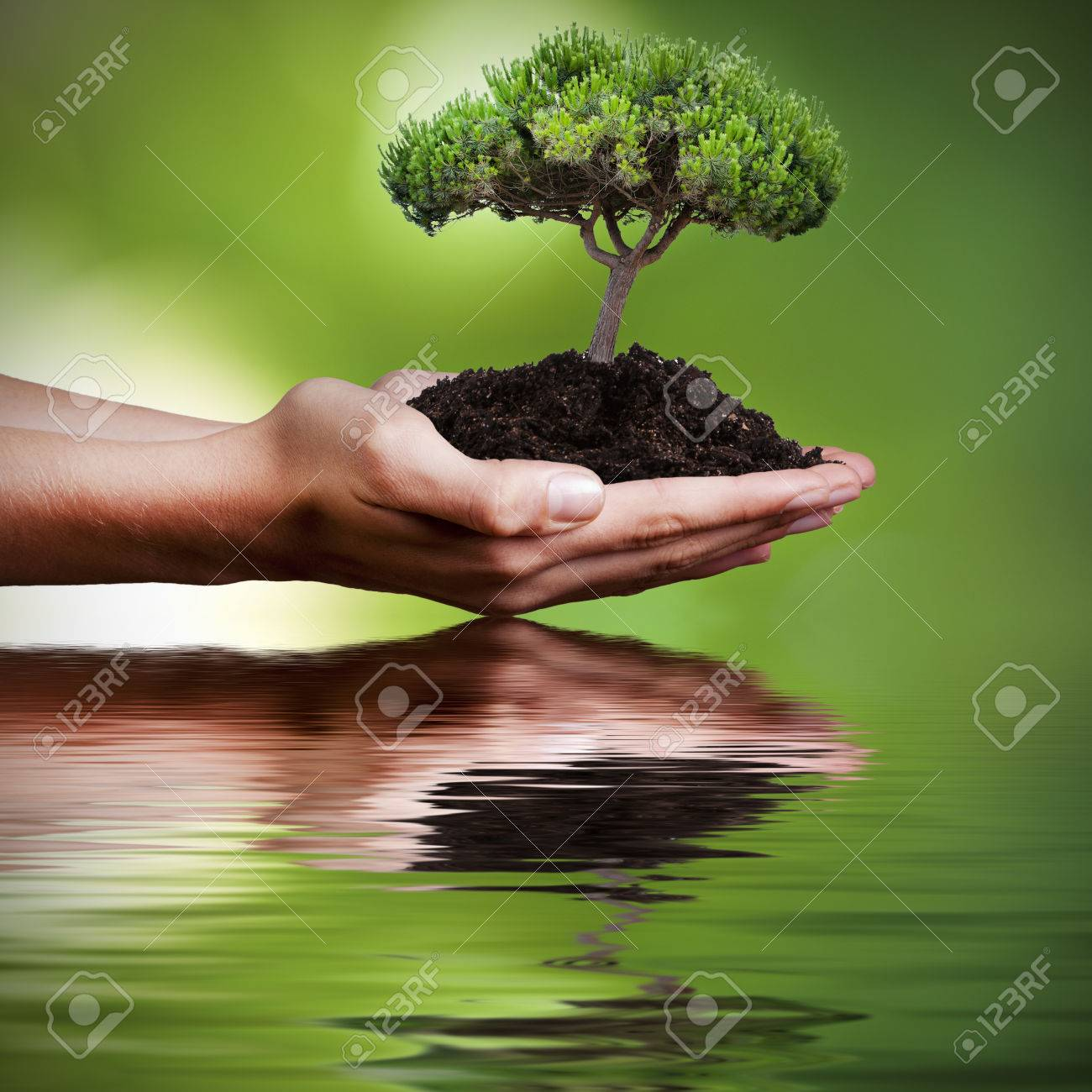 tree in hands with reflection in water - 54967946