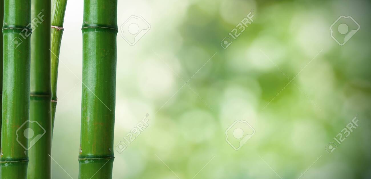 bamboo logs on natural green background - 120533940