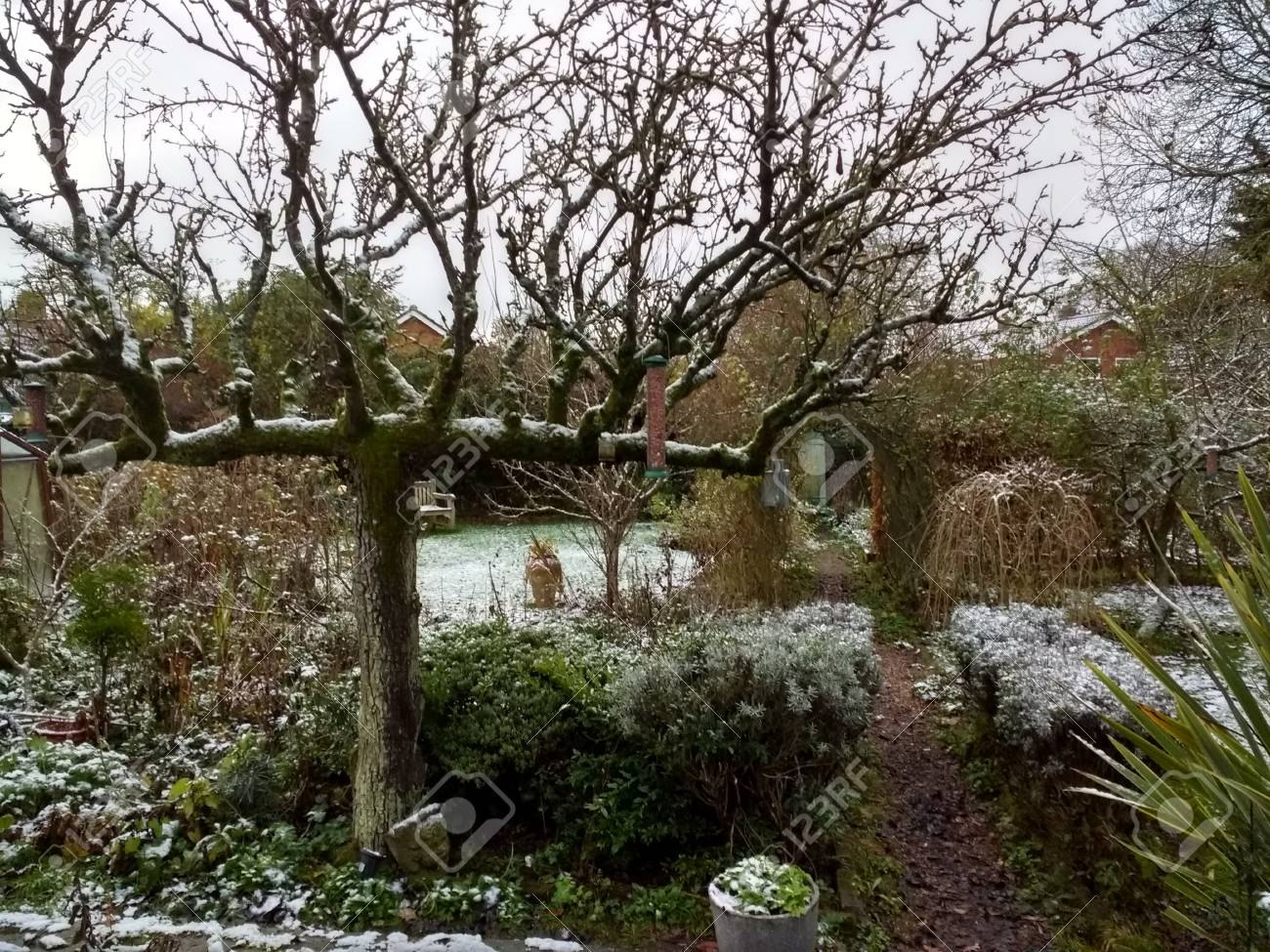 A Snow Scene In An English Country Garden With Light Snow On.. Stock ...