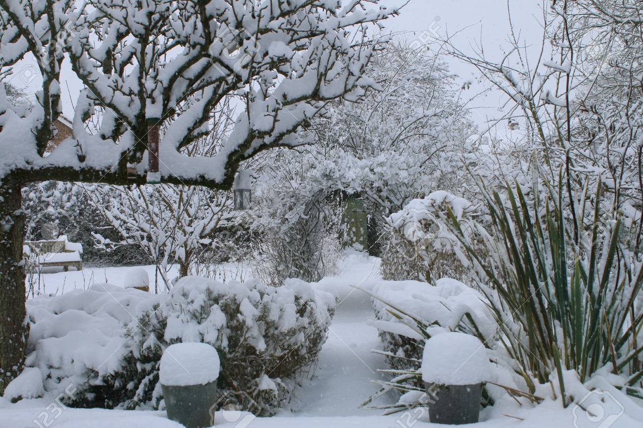 White Christmas Snow.A Landscape Snow Scene Showing A Winter White Christmas Garden