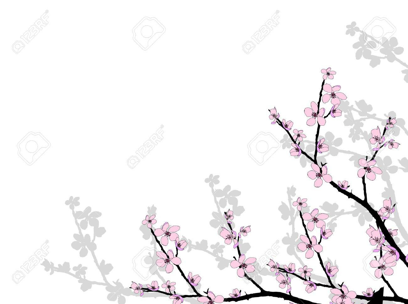 Branch of beautiful seasonal pink cherry blossom Stock Vector - 12859572