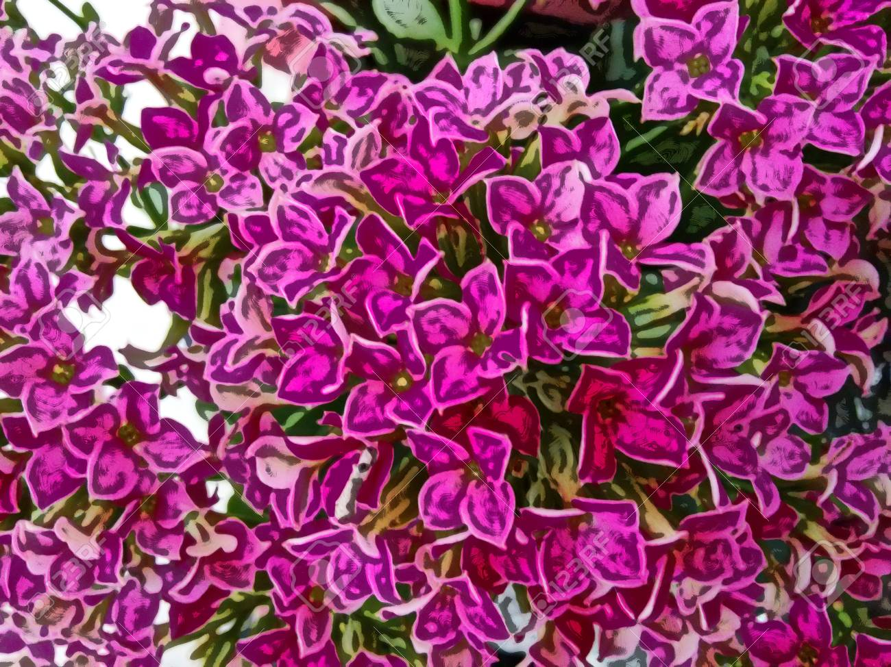 Kalanchoe Flower Pink A Tropical Succulent Plant With Clusters
