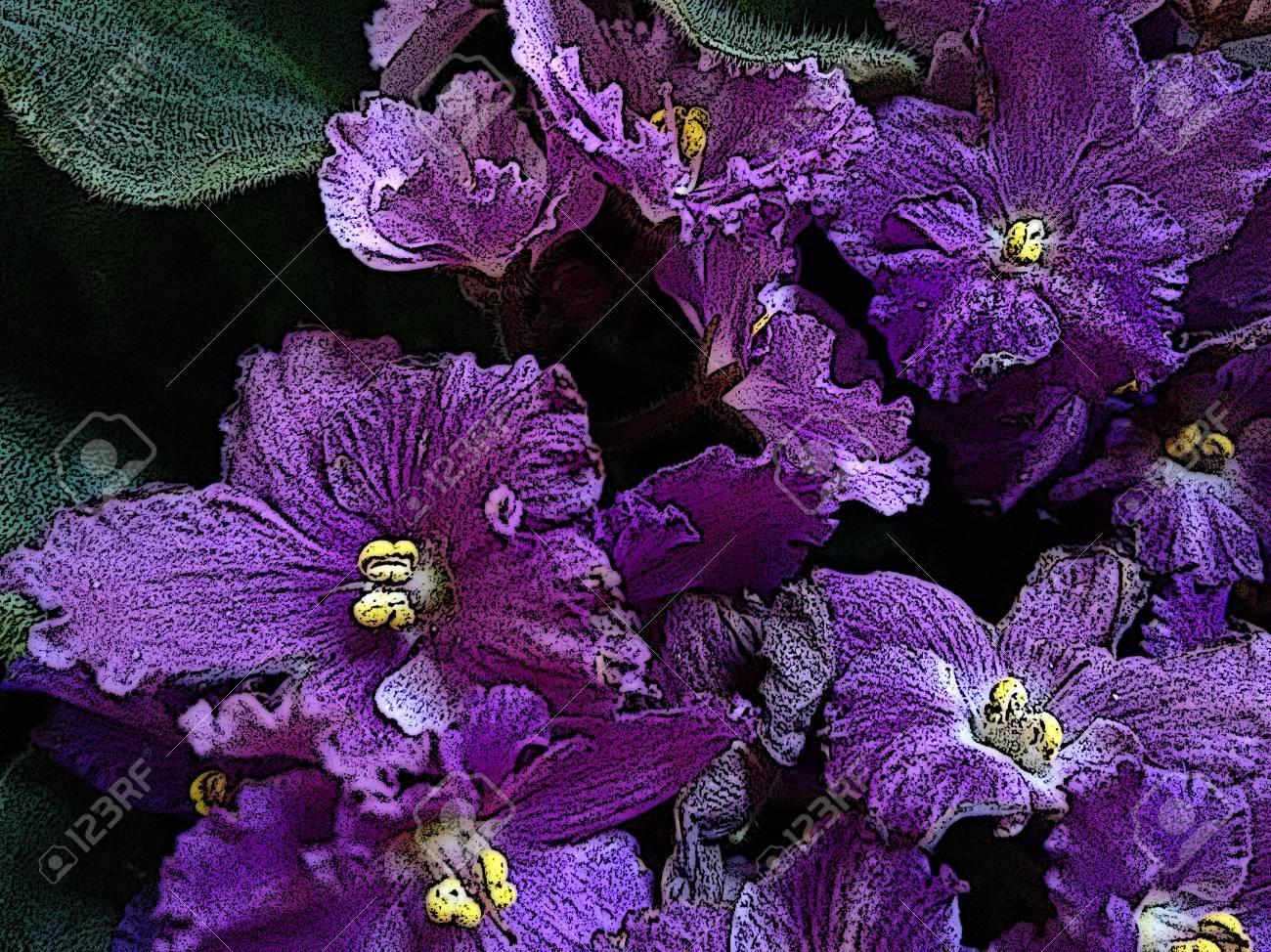 Exceptional Fiore Viola Africano   Viola   La Viola Africana è Una Pianta Erbacea Di  Regioni Temperate, In Genere Con Fiori A Cinque Petali Viola, Blu, Rosa O  Bianco, ...