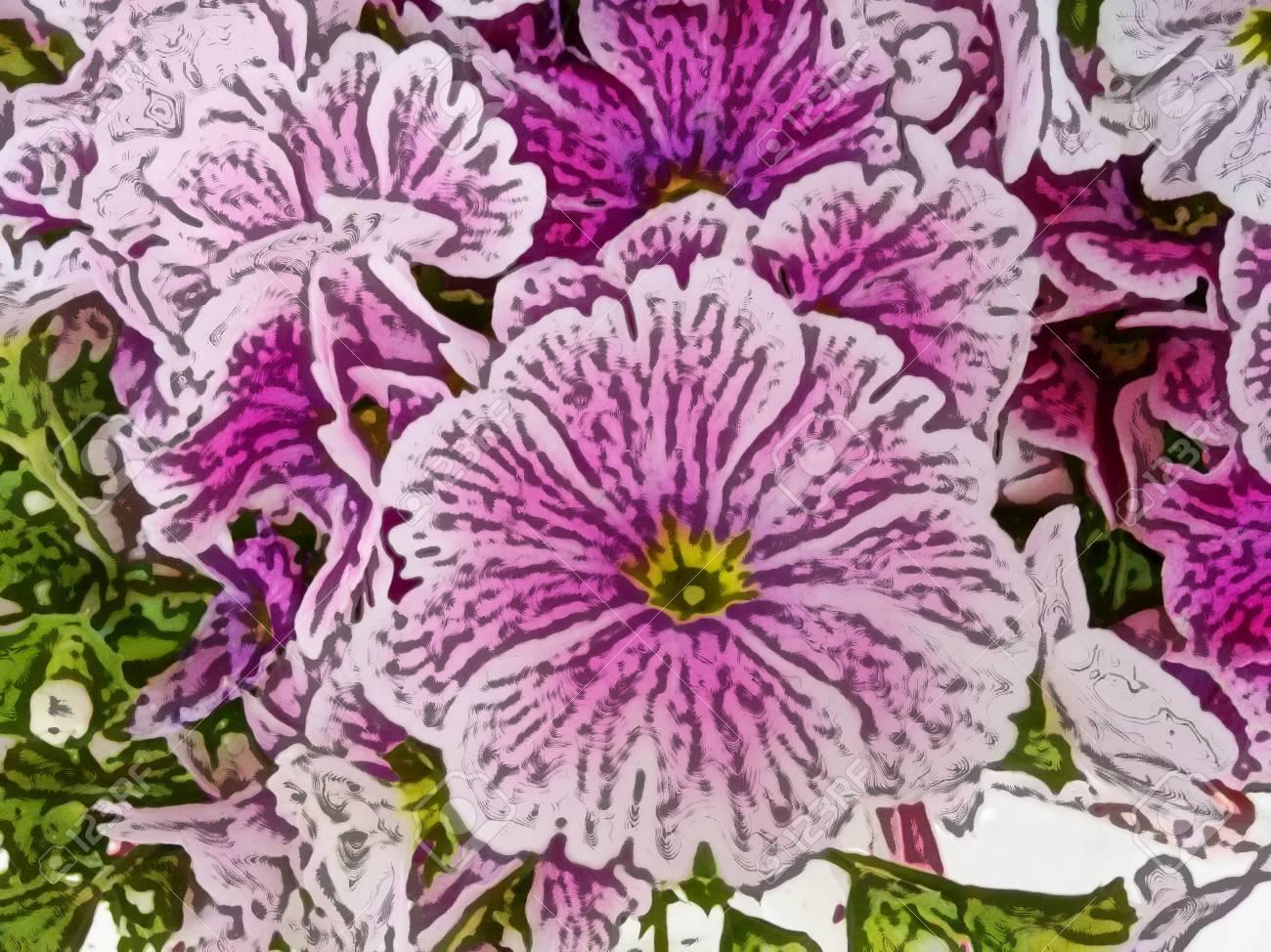 Pianta Fiori Rosa.Immagini Stock Fiori Rosa Cineraria La Cineraria E Una Pianta