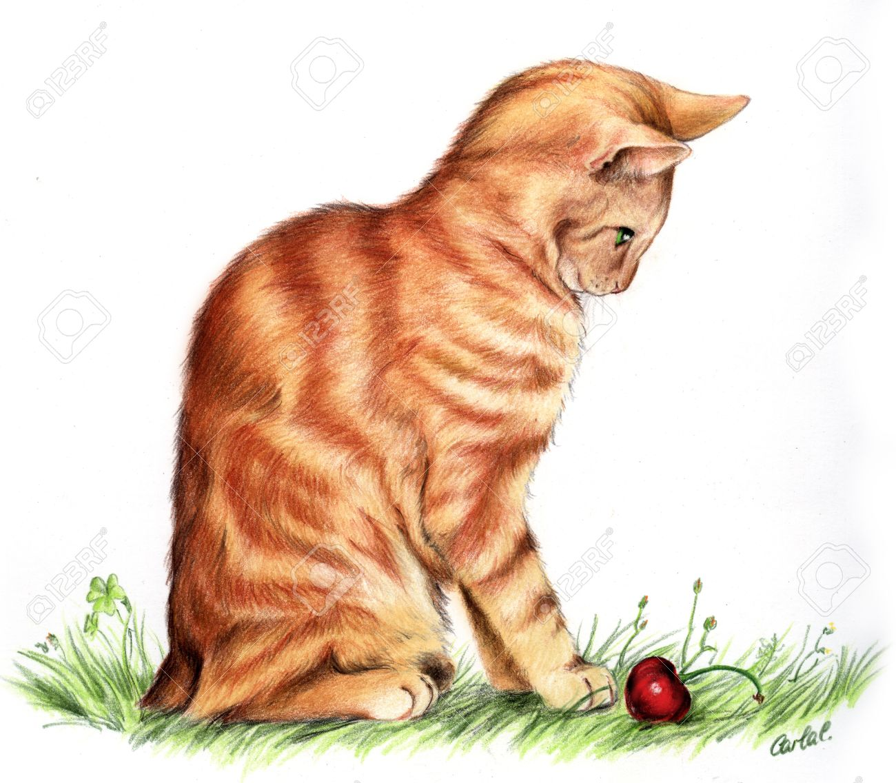 Cute hand drawn Manx Red cat, made with pencils. Stock Photo - 11220846