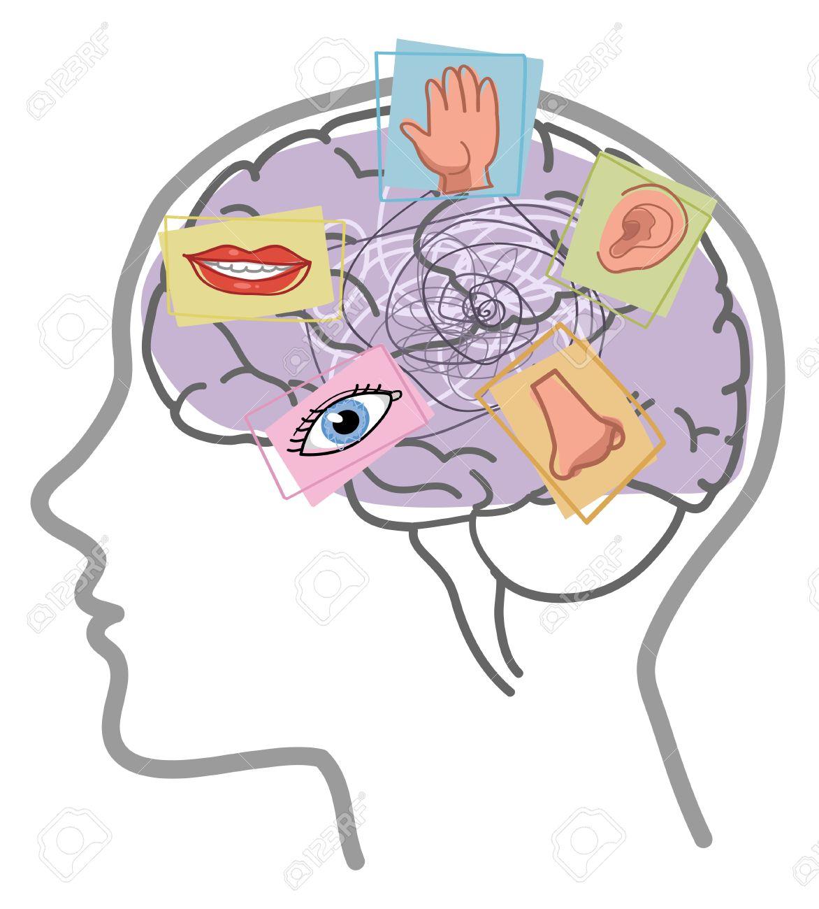Human brain disorder vector 5 senses - 72861479
