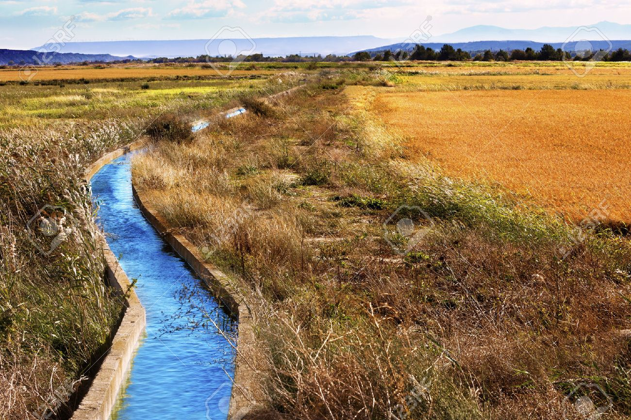 Irrigation water channel. Rural landscape wheat fields - 40225768